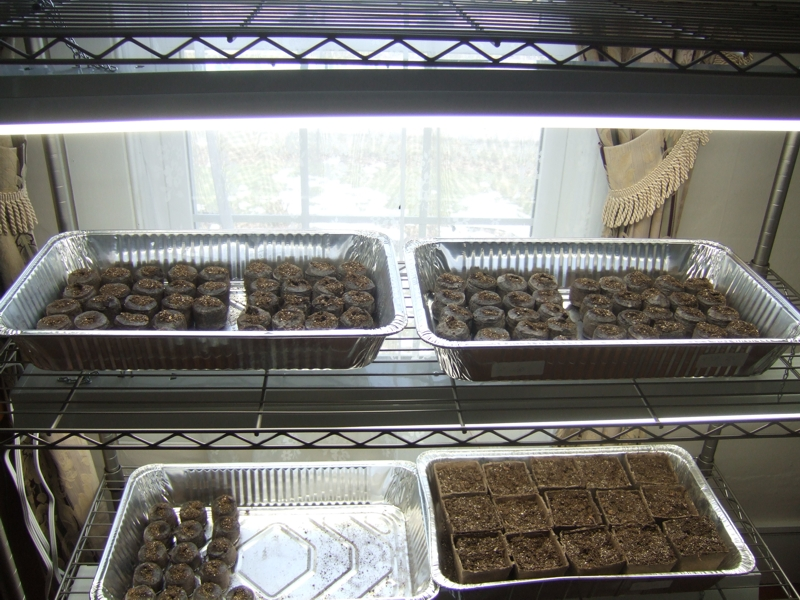 First seedlings in the grow stand