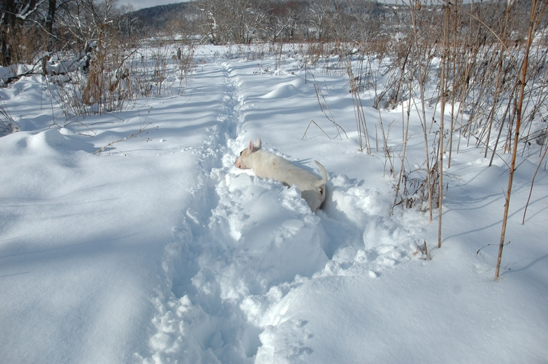 Tuna Sinking in Snow